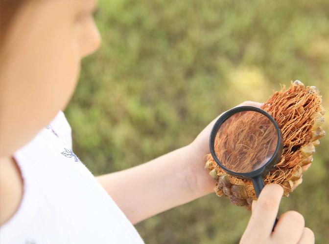 Orman Kaşifleri Usturlab Atölye