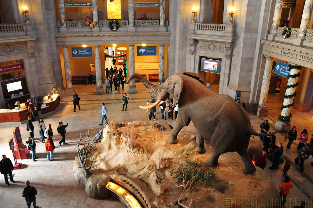 Doğa Tarihi Ulusal Müzesi